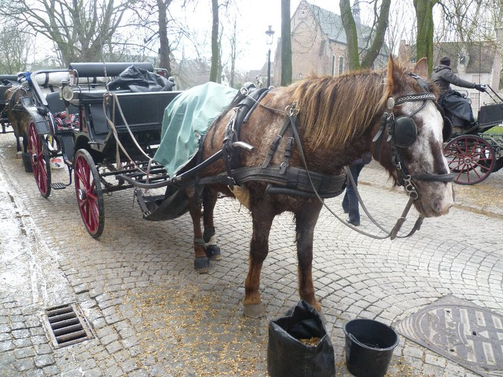 A horse and cart in Bruges, Belgium